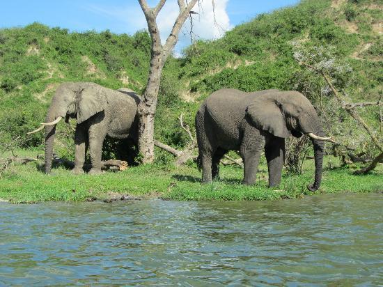 elephants-uganda