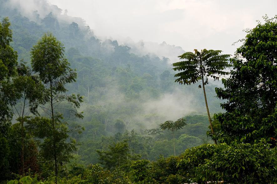 bwindi-view