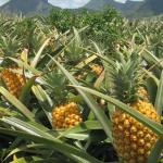 Agro-tourism-in-Uganda