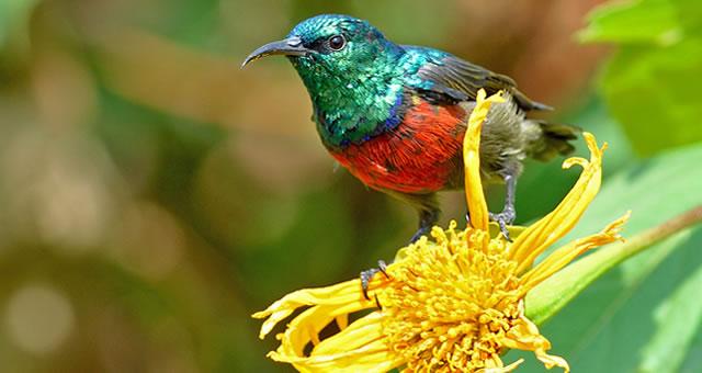 Selfdrive East Africa birding tour