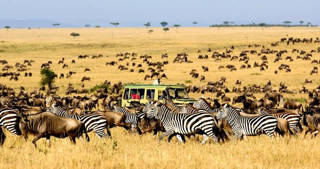 Game Safari in Kidepo Valley National park